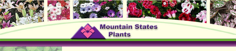 Mountain States Plants